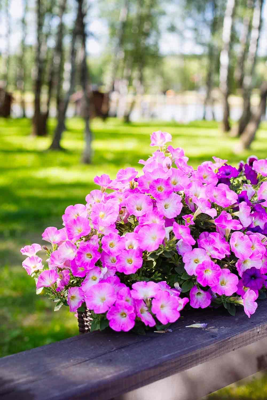 cuidado de jardines en casalarreina