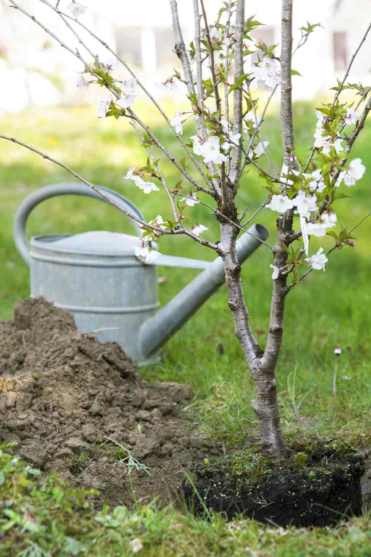 jardinero en casalarreina