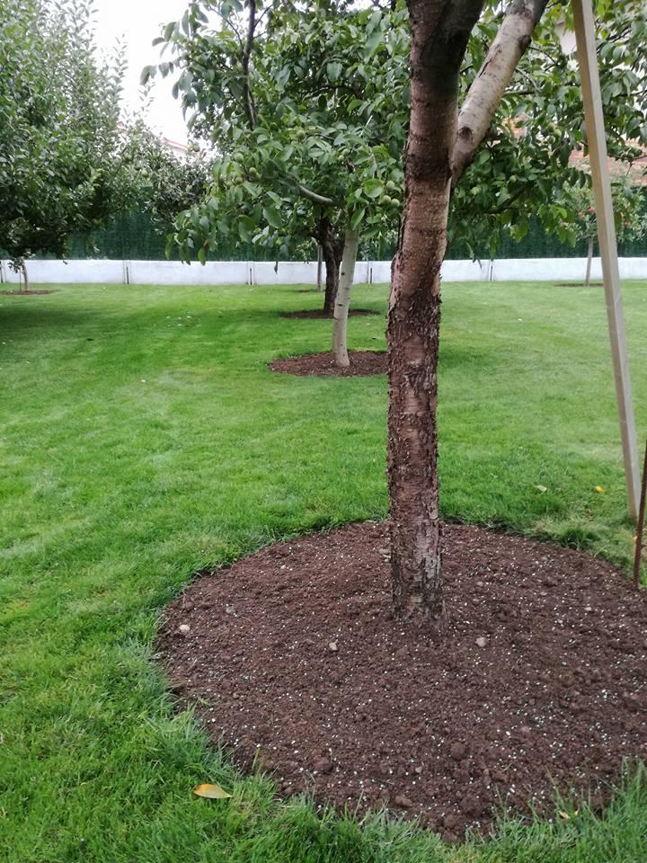 mantenimiento de jardines en casalarreina