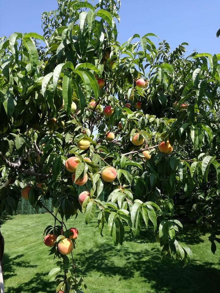 mantenimiento de arboles en casalarreina